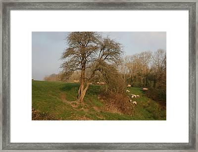 Spring In Ireland Framed Print