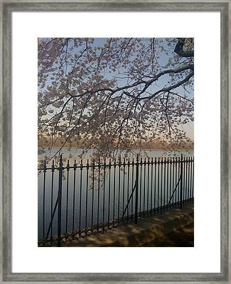 Spring In New York City Framed Print by Wendy Uvino