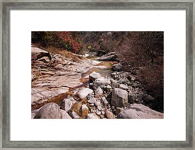 Spring In Paradise Framed Print by Charline Xia