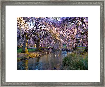 Spring In Portland Framed Print by Craig Perry-Ollila