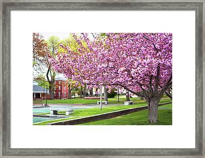 Spring In Prescott Park Framed Print