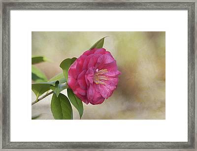 Spring In Savannah Framed Print