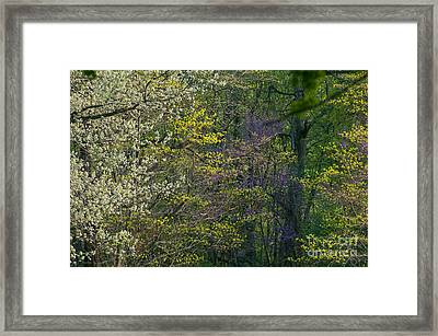 Spring In Southern Forrest Framed Print by Lowell Anderson