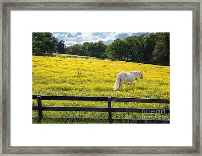 Spring In Tennessee Framed Print