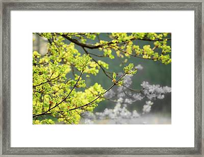 Spring In The Arboretum Framed Print