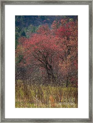 Spring In The Cove Framed Print by Douglas Stucky