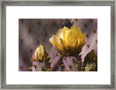 Spring In The Desert Framed Print