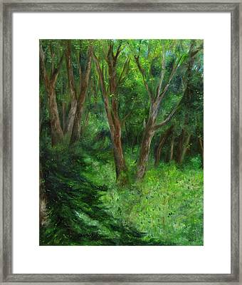 Spring In The Forest Framed Print