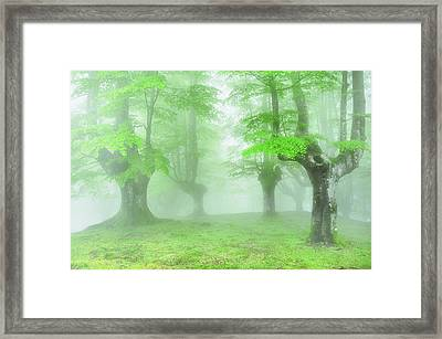 Spring In The Forest Framed Print by Mikel Martinez de Osaba