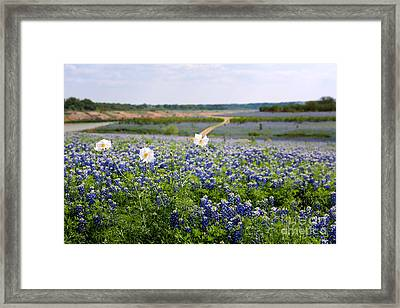 Spring In The Hill Country Framed Print