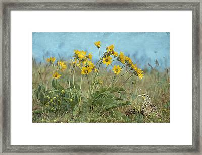 Spring In The Meadows Framed Print