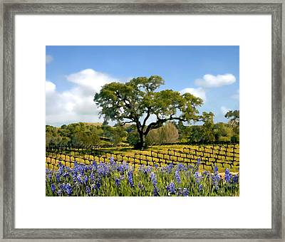 Spring In The Vineyard Framed Print