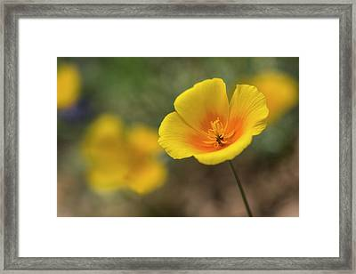 Framed Print featuring the photograph Spring Is Beckoning  by Saija Lehtonen