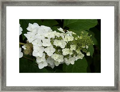 Spring Is Busting Out All Over Framed Print