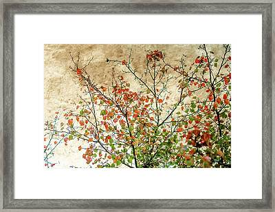 Spring Is Gone Framed Print