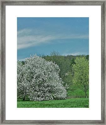 Spring Is Here Framed Print by Debra     Vatalaro