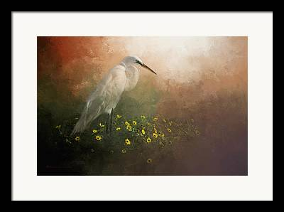 Great White Egret Framed Prints