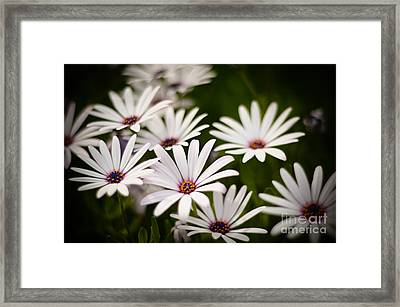 Framed Print featuring the photograph Spring Is In The Air by Kelly Wade