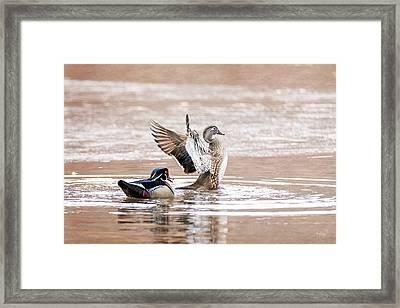 Spring Jubilation Framed Print by Everet Regal