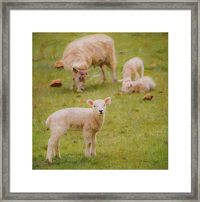 Framed Print featuring the photograph Spring Lamb by Bellesouth Studio