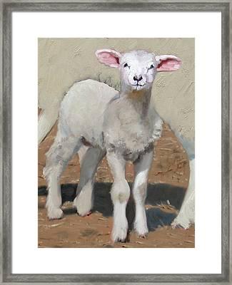 Spring Lamb Framed Print by John Reynolds