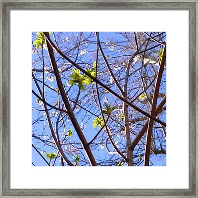 Spring Leaves #seasons #trees Framed Print