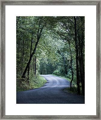 Spring Light On A Forest Road Framed Print