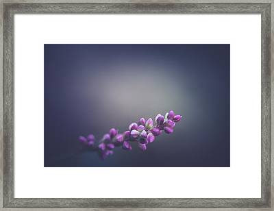 Spring Lights  Framed Print by Shane Holsclaw