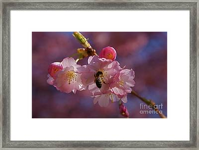 Spring Framed Print by Louise Fahy