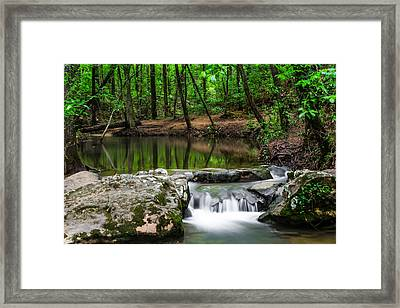 Spring Lush Framed Print by Shelby  Young