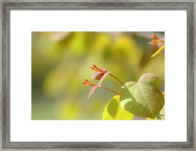 Framed Print featuring the photograph Spring Macro2 by Jeff Burgess