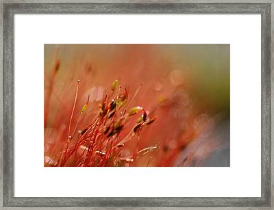 Framed Print featuring the photograph Spring Macro3 by Jeff Burgess