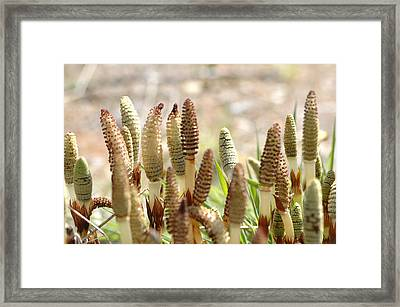 Framed Print featuring the photograph Spring Macro4 by Jeff Burgess