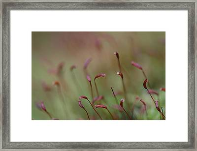 Framed Print featuring the photograph Spring Macro5 by Jeff Burgess