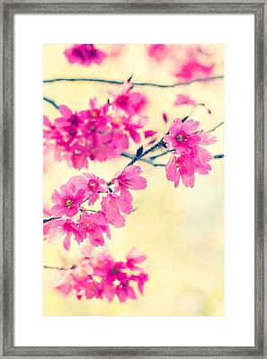 Framed Print featuring the photograph Spring Magic by Julie Andel