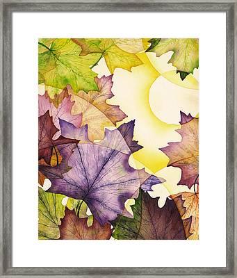 Spring Maple Leaves Framed Print by Christina Meeusen