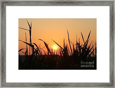 Spring Meadow Sunrise Framed Print