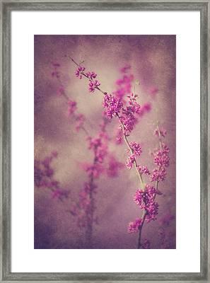 Spring Melody Framed Print
