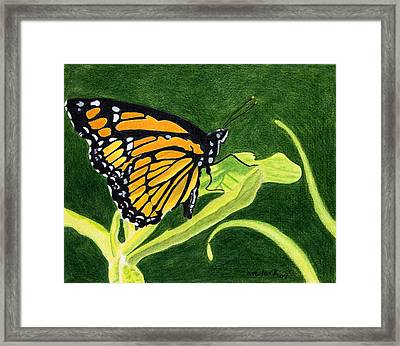 Spring Monarch Framed Print