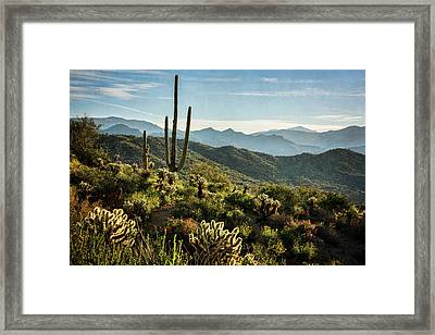 Framed Print featuring the photograph Spring Morning In The Sonoran  by Saija Lehtonen