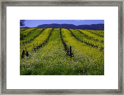 Spring Mustard Field Framed Print by Garry Gay