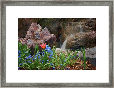 Framed Print featuring the photograph Spring  by Nikolyn McDonald