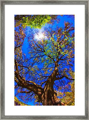 Spring Oak Framed Print