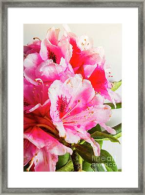 Spring Of Flower Bouquets Framed Print