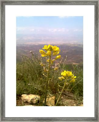 Spring Of Jordan Framed Print by Micheal Sidawi