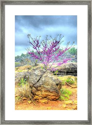 Spring On Devils Den Framed Print by Paul W Faust - Impressions of Light
