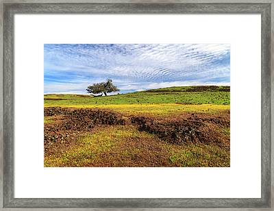 Framed Print featuring the photograph Spring On North Table Mountain by James Eddy