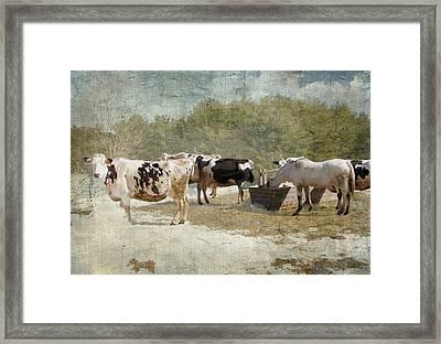 Spring On The Farm  Framed Print