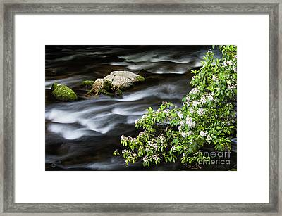 Framed Print featuring the photograph Spring On The Oconaluftee River - D009923 by Daniel Dempster