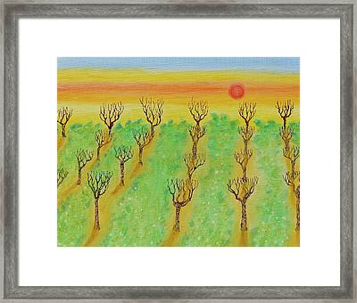 Spring Orchard Sunset Framed Print by Michele Myers